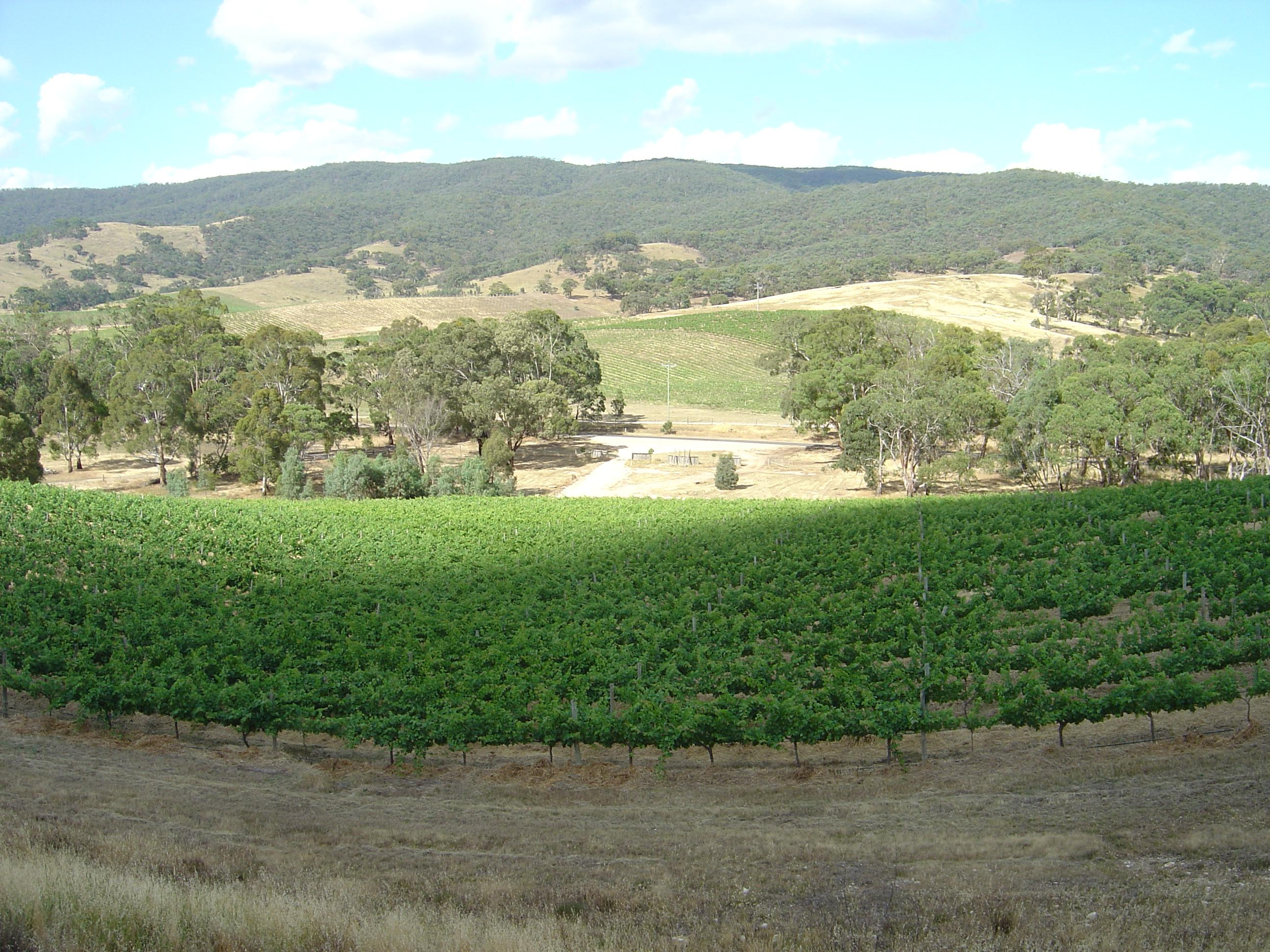 Landsborough Vineyard